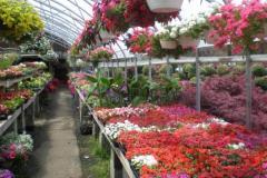 Garden-Center-Eldersburg-Maryland